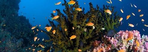 Ormus Minerals Rainbow Ocean Nectar Mariene Phytoplankton Benefits