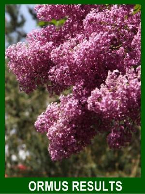 Ormus increased blooms
